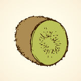 Ripe kiwi fruit. Vector drawing. Tasty raw tropical Chinese gooseberry Actinidia fruitful  on white backdrop. Freehand outline ink hand drawn picture sketchy in Stock Photography