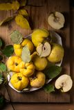 Ripe large quince Royalty Free Stock Photography