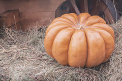 Ripe large ribbed pumpkin on straw, vintage colours. Rustic fall background with copy space Stock Images