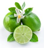 Ripe lime fruits on the white background. Royalty Free Stock Photo