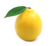 Ripe lemon isolated. Ripe lemon isolated on white background Royalty Free Stock Photos