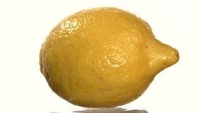 Ripe lemon, on white, rotation, close up stock video