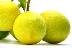 Ripe lemons. On a white background Royalty Free Stock Images