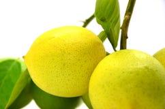 Ripe lemons. On a white background Stock Photo