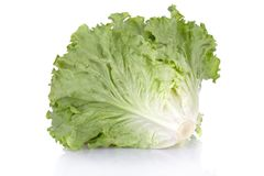 Ripe lettuce Stock Photo