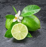 Ripe lime fruits. Ripe lime fruits on the gray background Royalty Free Stock Photography