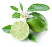 Ripe lime fruits. Ripe lime fruits on the white background Royalty Free Stock Photography
