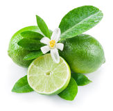 Ripe lime fruits. Ripe lime fruits on the white background stock photos