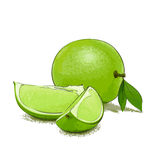 Ripe lime and slice Stock Photos