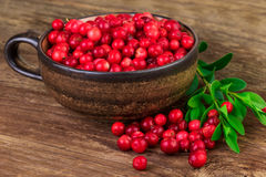 Ripe lingonberries cranberries cup close-up Royalty Free Stock Photo