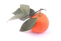 Ripe mandarine and leaf Stock Images
