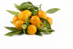 Ripe mandarines with leaves close-up on a white background. Tangerines with leaves on a white background.  royalty free stock images