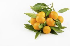 Ripe mandarines with leaves close-up on a white background. Tangerines with leaves on a white background.  royalty free stock photography