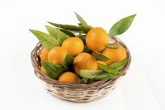 Ripe mandarines with leaves close-up on a white background. Tangerines with leaves on a white background.  royalty free stock image