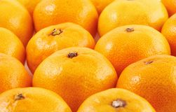 Ripe mandarins Stock Photography