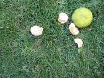 Ripe mandarins in green grass Stock Images