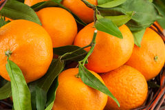 Ripe mandarins with leaves Royalty Free Stock Photography