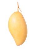 Ripe mango Royalty Free Stock Photo