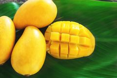 Ripe mango cut in square with other yellow mangoes on a green leaf. Ripe mango fruit cut in square with other yellow mangoes on a green leaf Stock Image