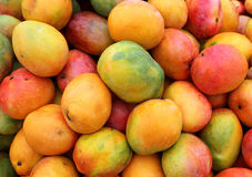 Ripe mango fruit. As agricultural background Royalty Free Stock Photography