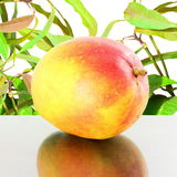 Ripe mango fruit in pure white background Stock Photography