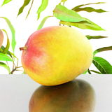 Ripe mango fruit in pure white background Stock Images