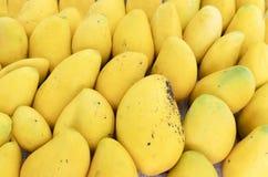 Ripe mango. A pile of fresh Mango Fruit Royalty Free Stock Image