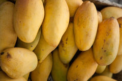 Ripe mangoes. Royalty Free Stock Photo