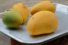 Ripe mangoes in aluminum tray. Ripe and fresh mangoes in aluminum tray royalty free stock photos