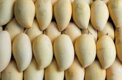 Ripe mangoes. Royalty Free Stock Image