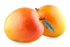 Mangoes. Ripe mangoes on white background Stock Images