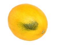 Ripe melon Stock Images