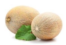 Ripe melon Stock Image