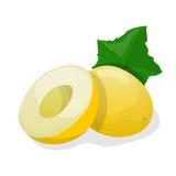 Ripe melon. Vector illustration Stock Photos