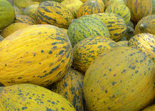 Ripe melons Royalty Free Stock Image