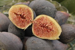 RIpe Mission Fig 6 Royalty Free Stock Photography