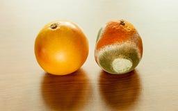 Ripe and moldy grapefriut. Stock Image