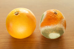 Ripe and moldy grapefriut. Royalty Free Stock Photos