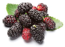 Ripe mulberries. Royalty Free Stock Photos