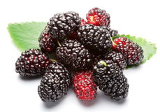 Ripe mulberries. Stock Image