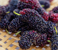 Ripe mulberries Stock Images