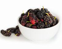 Ripe mulberries Royalty Free Stock Image