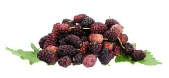Ripe mulberry berries Royalty Free Stock Photo