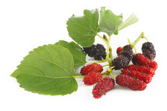 Ripe mulberry berries Royalty Free Stock Image
