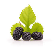 Ripe mulberry with a leaf Stock Image