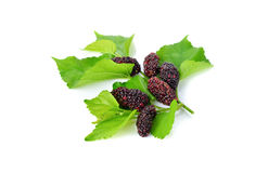 Ripe mulberry with leaf on white Stock Photo