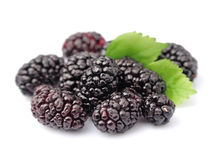 Ripe mulberry with leafs Stock Image