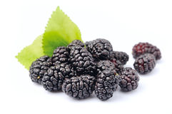 Ripe mulberry Royalty Free Stock Image