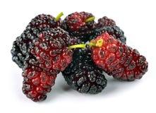 Ripe mulberry Stock Photos