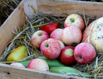 Ripe natural organic apples on wooden box Stock Photos